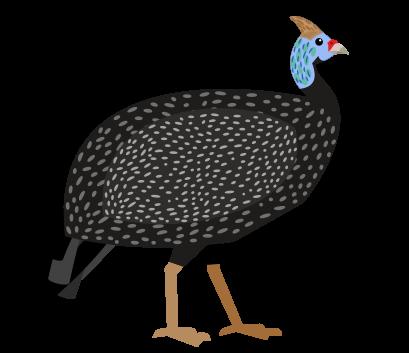 Gunea-fowl-large