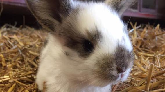 Rabbit-img