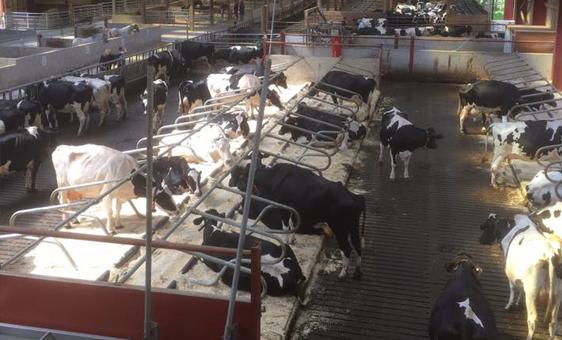 cow-barn