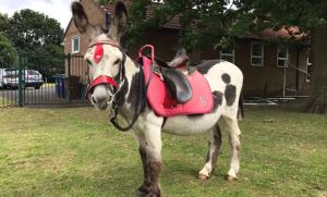 donkey-ride