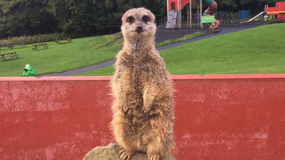 meerkats-guard-img