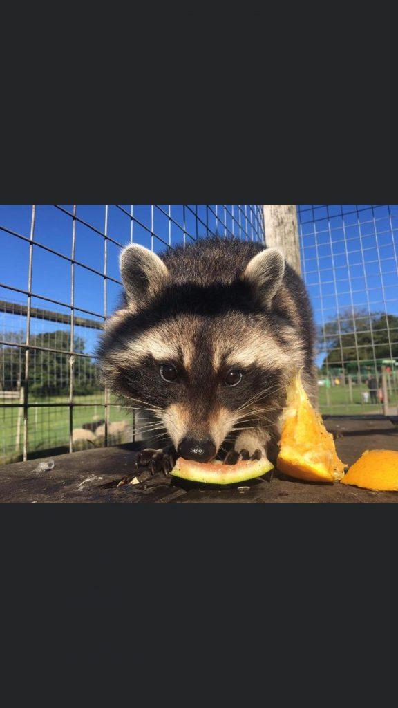 Rocket Raccoon 576x1024