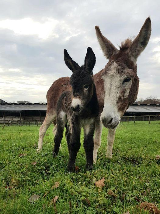 Smithills Donkeys