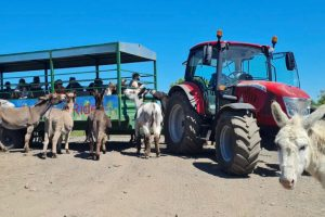 Smithills Open Farm July 2021_Tractor and donkeys